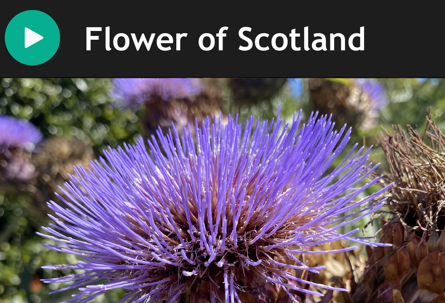 Flower of Scotland for Bagpipes